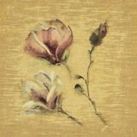 Magnolia Blossom on Gold Fine Art Print