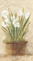 Garden White Narcissus Panel Fine Art Print