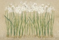 Narcissus Row Cool Fine Art Print