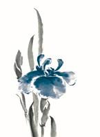 Japanese Iris II Crop Indigo Framed Print