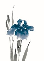 Japanese Iris III Crop Indigo Fine Art Print