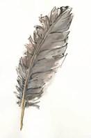 Gold Feathers VII Fine Art Print