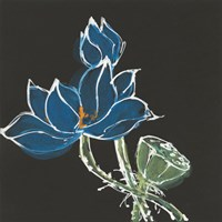 Lotus on Black VII Fine Art Print