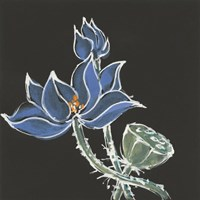 Lotus on Black VI Fine Art Print
