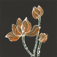 Lotus on Black IV Fine Art Print