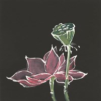 Lotus on Black III Fine Art Print
