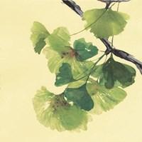 Gingko Leaves II Dark Fine Art Print