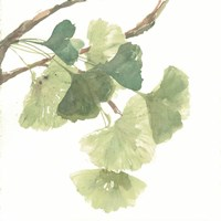 Gingko Leaves I on White Fine Art Print