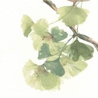 Gingko Leaves II on White Framed Print
