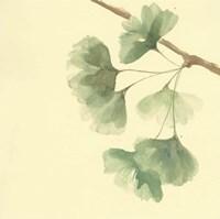 Gingko Leaves III Fine Art Print