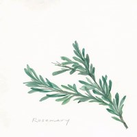 Rosemary II Framed Print