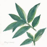 Bay Leaf Framed Print