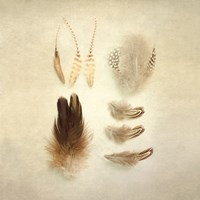 Feathers II Square Fine Art Print