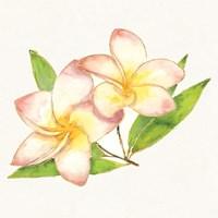 Tropical Fun Flowers I Fine Art Print