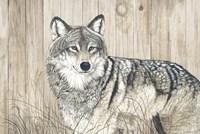 Wolf in Grass on Barn Board Fine Art Print