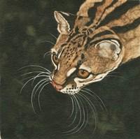 The Margay Fine Art Print