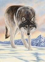 Wolf in Snow Fine Art Print