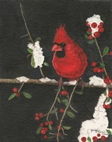 The Cardinal Fine Art Print