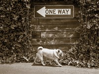 Which Way Fine Art Print