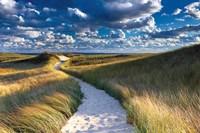 Philbin Beach Path Fine Art Print