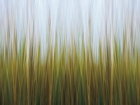 Seagrass Canvas Fine Art Print