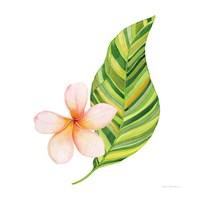 Treasures of the Tropics X Fine Art Print