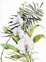 Botanical Phalaenopsis Fine Art Print
