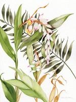 Botanical Shell Ginger Fine Art Print