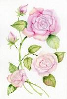 Floral Delight IV Fine Art Print
