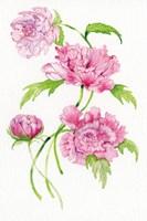 Floral Delight III Fine Art Print