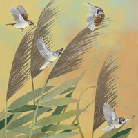 Sparrows and Phragmates Sq Fine Art Print