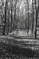Through the Woods Fine Art Print