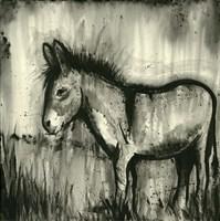 BW Donkey Fine Art Print