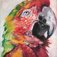 Parrot I Framed Print