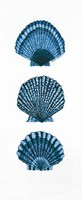 Shells Fine Art Print