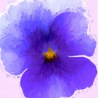 Pansy Purple Fine Art Print