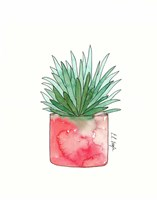 Aloe Fine Art Print