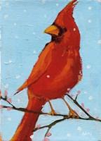 Cardinal II Fine Art Print