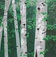 Shady Grove Fine Art Print