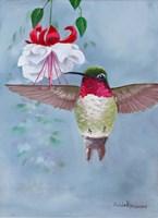 Rufus & White Fuchsia Fine Art Print