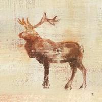 Elk Study Fine Art Print