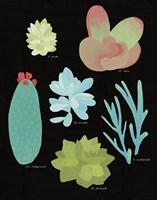 Succulent Chart II Framed Print
