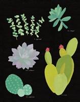 Succulent Chart III Framed Print