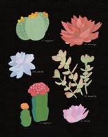 Succulent Chart V Framed Print