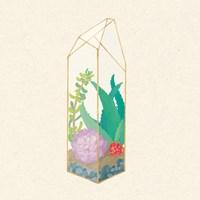 Succulent Terrarium I Framed Print