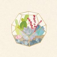 Succulent Terrarium III Framed Print