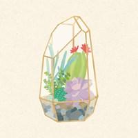 Succulent Terrarium VI Framed Print
