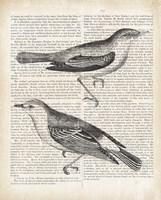 Vintage Birds on Newsprint Framed Print