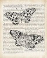 Vintage Butterflies on Newsprint Framed Print