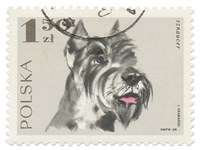 Poland Stamp I on White Fine Art Print